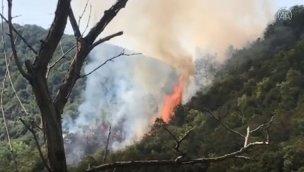 Sarıyer'de ormanlık alanda yangın çıktı!
