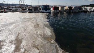 Akdeniz neden gittikçe kahverengileşiyor?