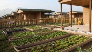 Hobi bahçelerinin fiyatları 350 bin TL'ye kadar çıkıyor!